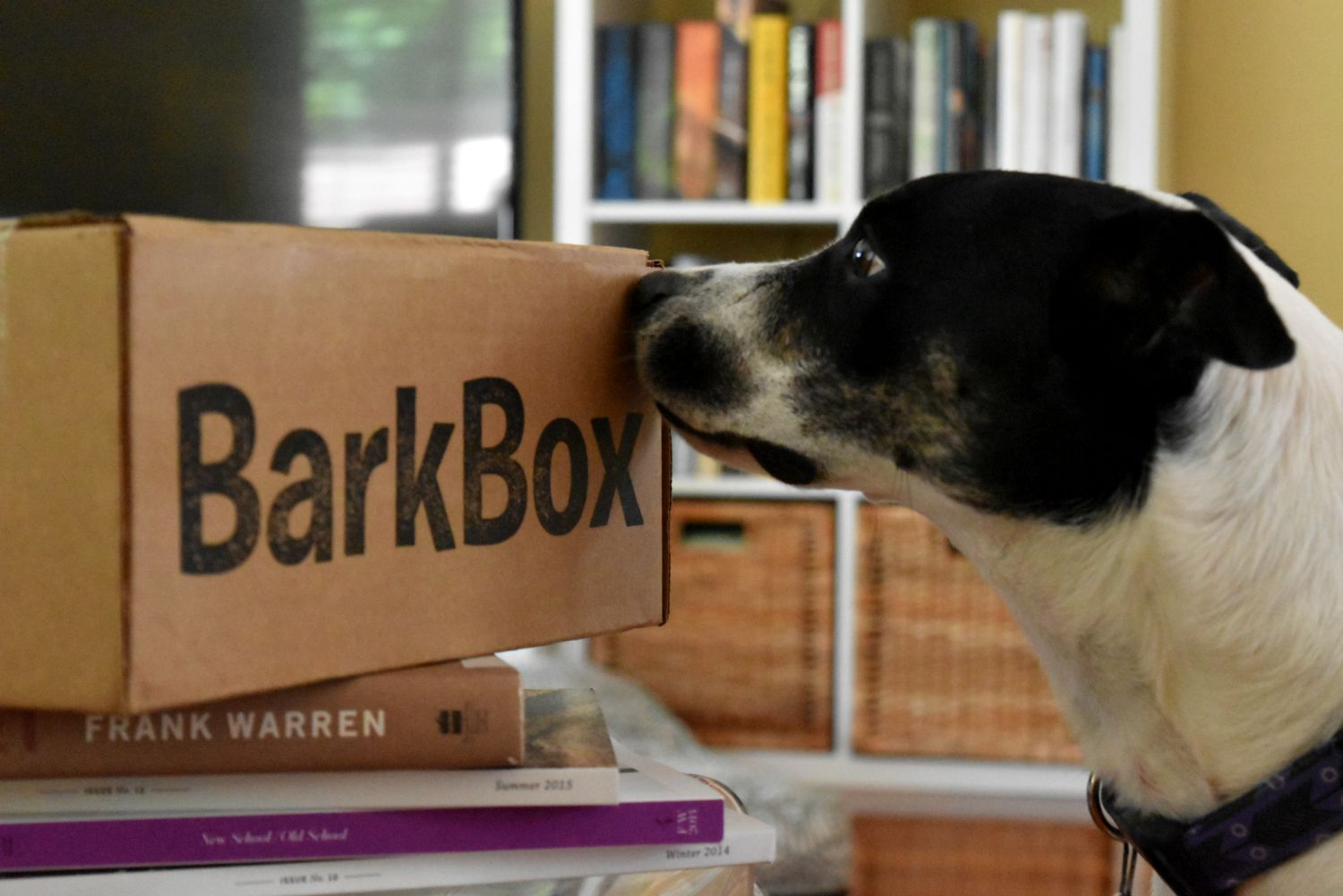 Barkbox Sniff